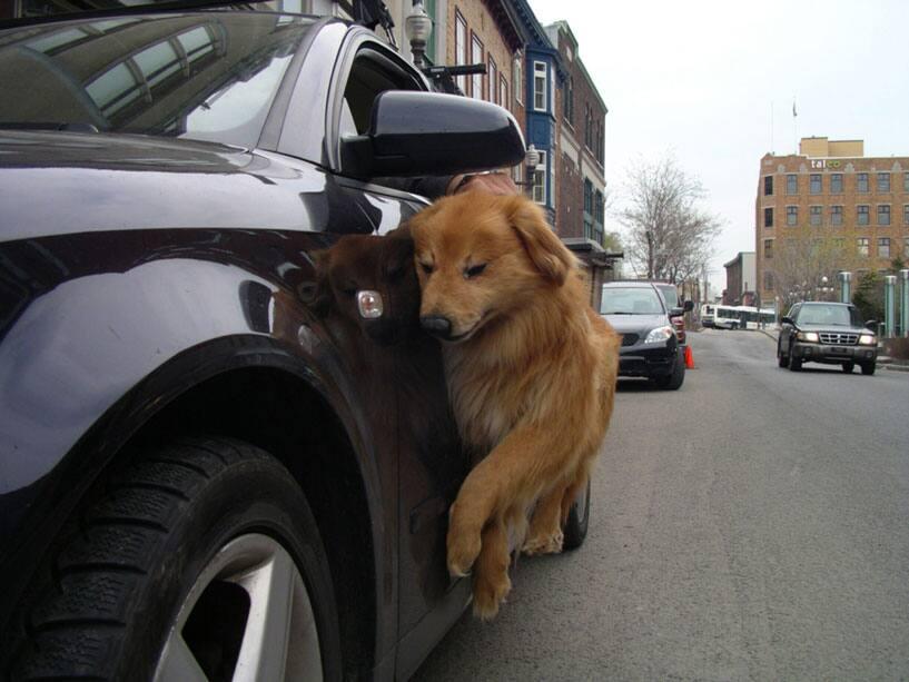 Promener son chien, 2005