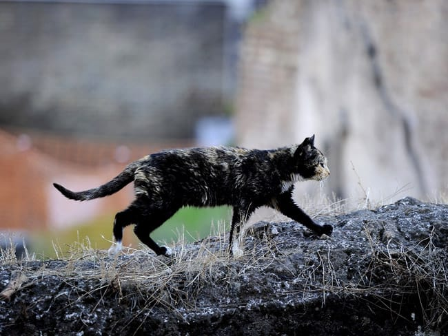 Feral cats: 116 million