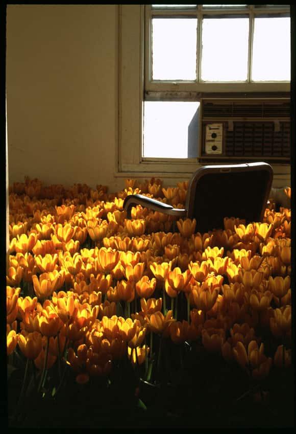 bloom-feature-3.jpg