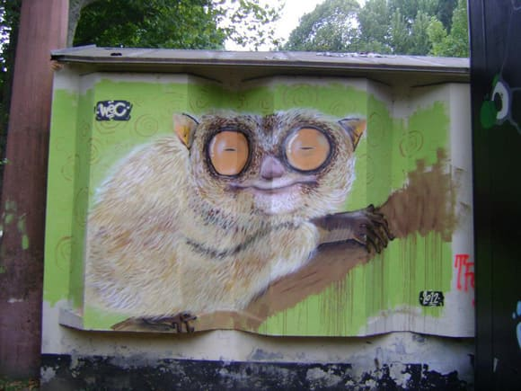 bombed-zoo-lemur.jpg