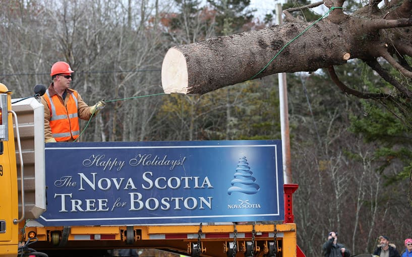 George Stroumboulopoulos Tonight | Every Year, Nova Scotia Sends Boston A Christmas  Tree To Say Thanks - George Stroumboulopoulos Tonight Every Year, Nova Scotia Sends