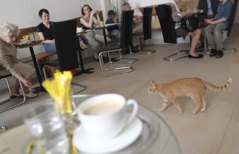 Cafe Neko, Vienna