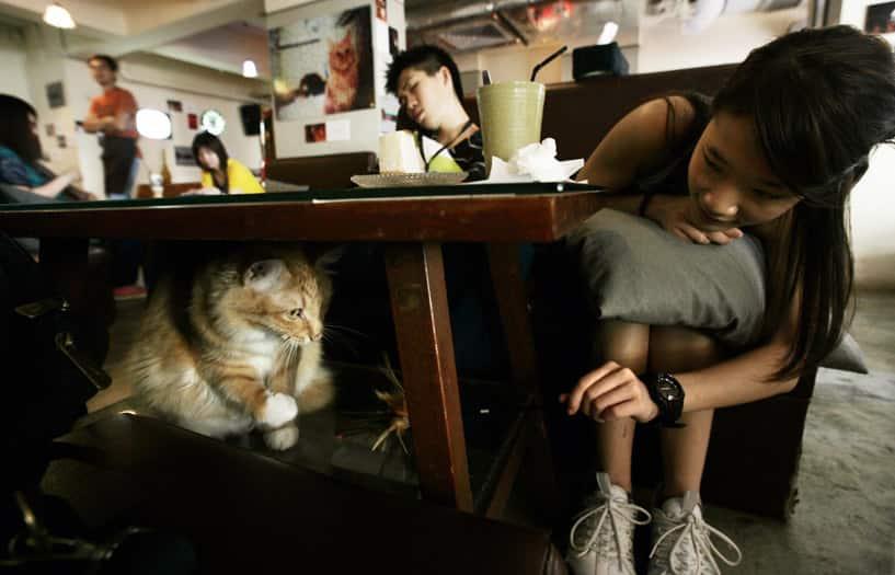 Ah Meow, Hong Kong