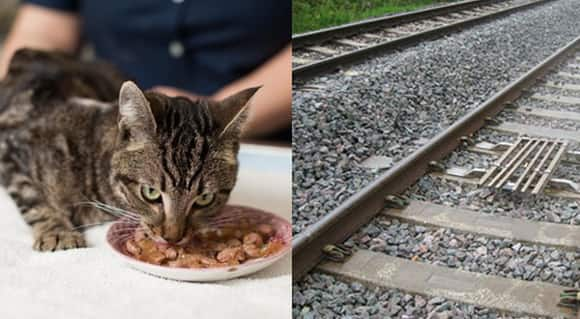 cat-train-feature.jpg