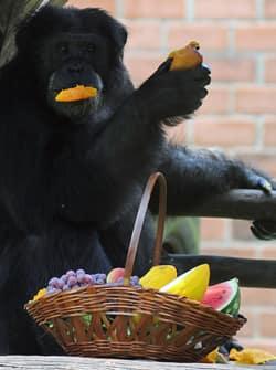 chimp-death-orange.jpg