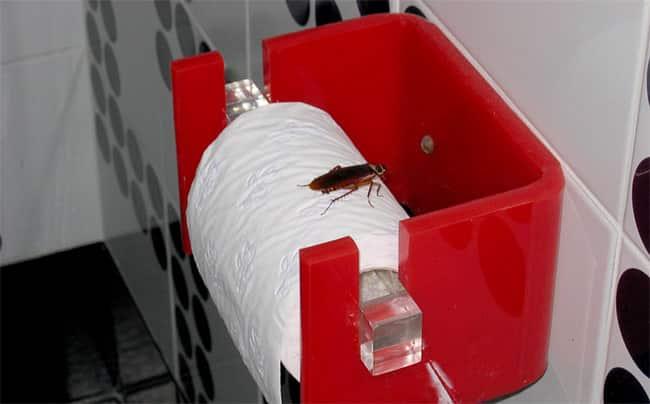 cockroach-bathroom.jpg