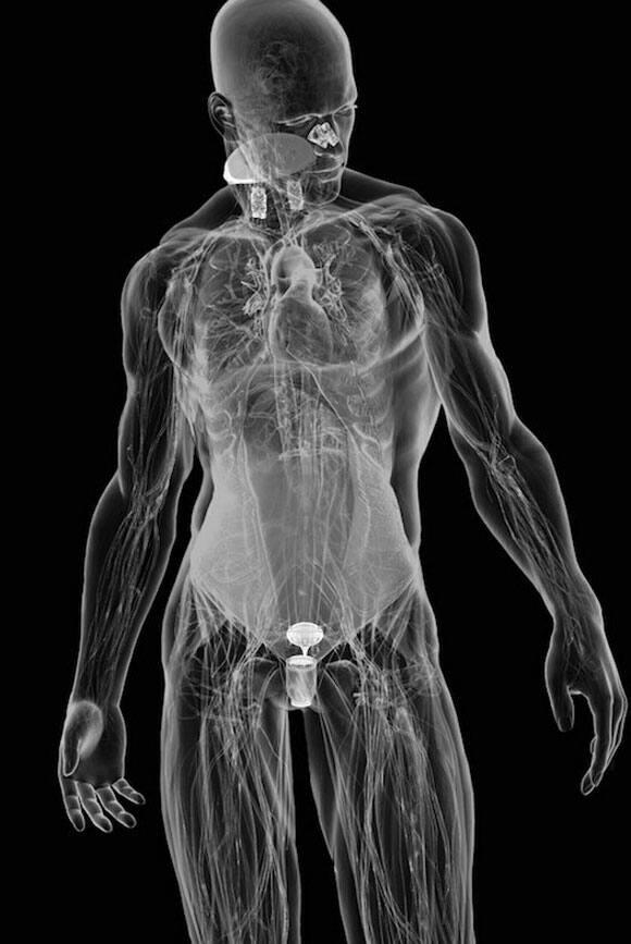 cyborg-organs-1.jpg