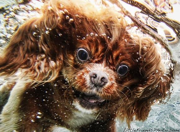 dog-pic-1.jpg