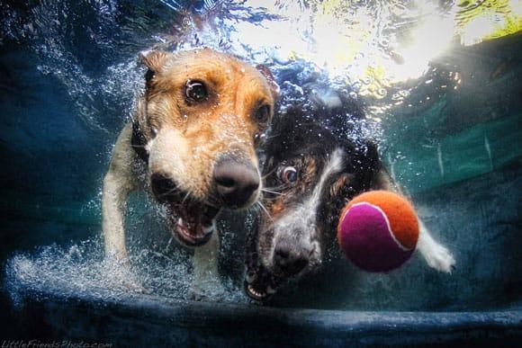 dog-pic-4.jpg