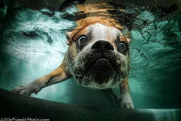dog-pic-9.jpg