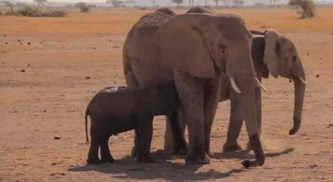 Want To See Something Beautiful? How About A Baby Elephant Rescued And Reunited With Her Mother