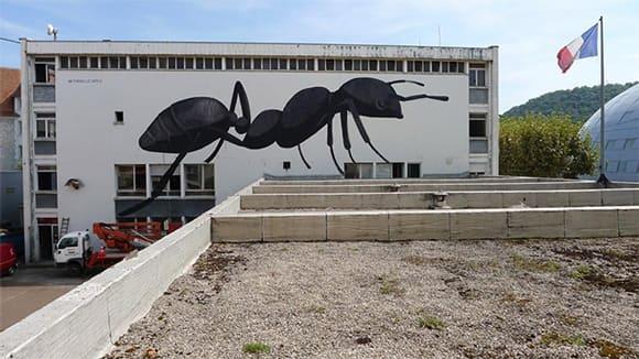 escif-ant.jpg
