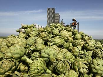 farm-workers-alba-artichokes.jpg