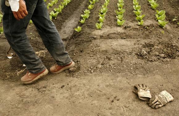 farm-workers-alba-lettuce.jpg