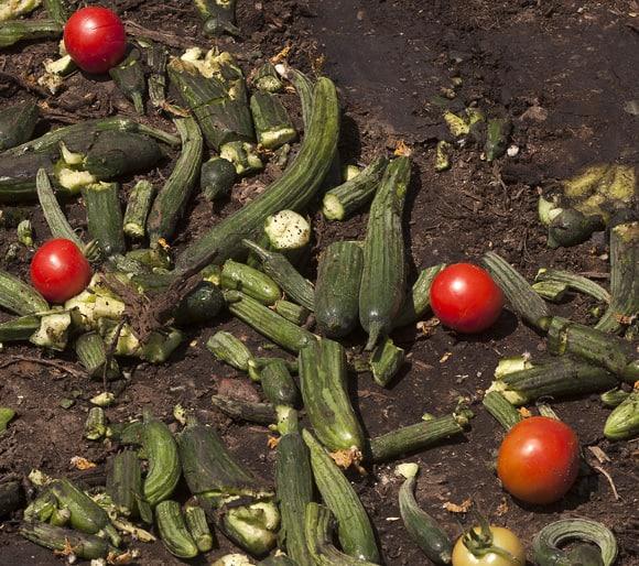 food-waste-50-cukes.jpg