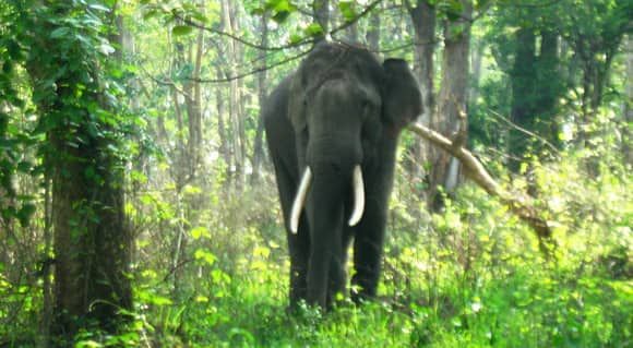 forest-elephants-feature.jpg