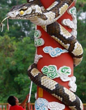 happy-chinese-new-year-it's-the-year-of-the-snake-let's-hope-it's-better-than-past-snake-years-feature1.jpg