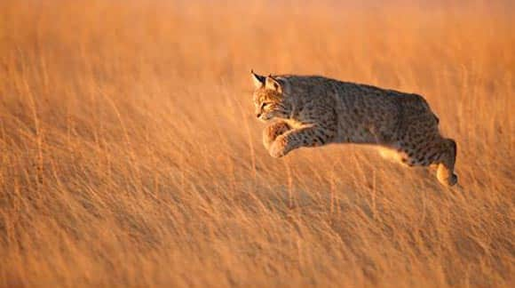 image-of-the-day-oh-baby-baby-its-a-wild-world-check-out-the-wildlife-photographer-of-the-year-awards-feature3.jpg