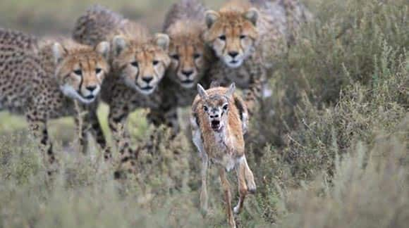 image-of-the-day-oh-baby-baby-its-a-wild-world-check-out-the-wildlife-photographer-of-the-year-awards-feature5.jpg