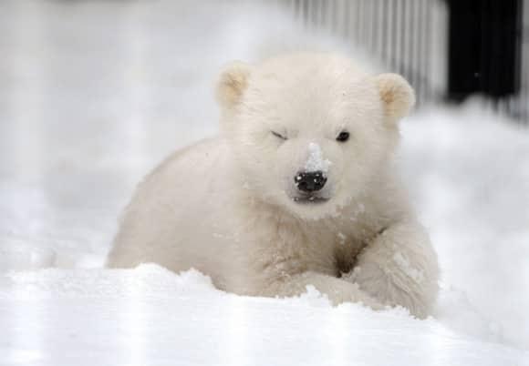 kali-snow.jpg