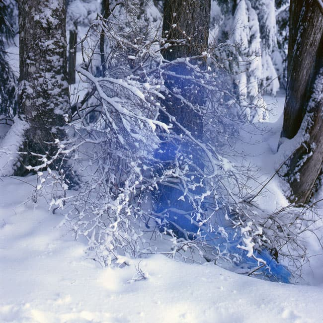 Snow Covered Branch with Cerulean Blue