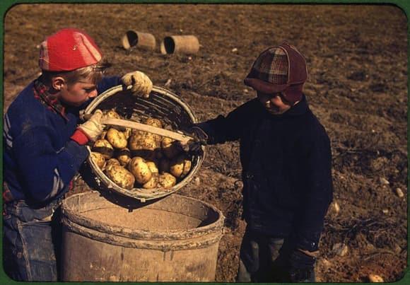 loc-colour-potatoes.jpg