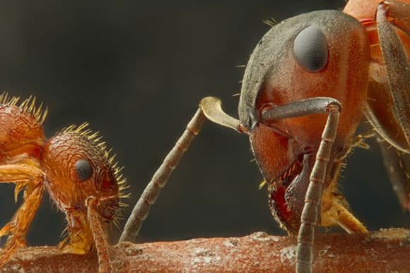microscopic-winners-ants.jpg
