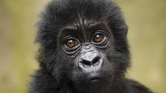 new-report-says-25-of-the-worlds-primate-species-are-on-the-brink-of-extinction-feature1.jpg