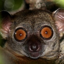 new-report-says-25-of-the-worlds-primate-species-are-on-the-brink-of-extinction-feature2.jpg