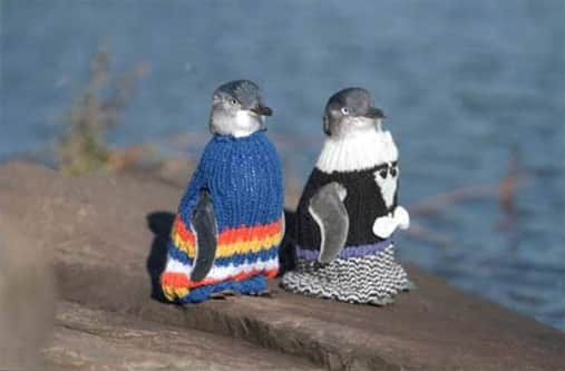penguin_sweater1.jpg