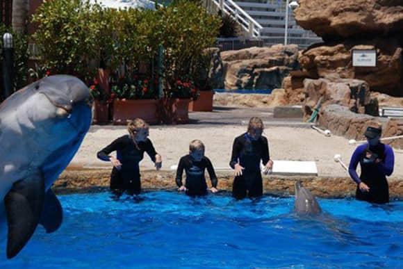 photobomb-dolphin.jpg