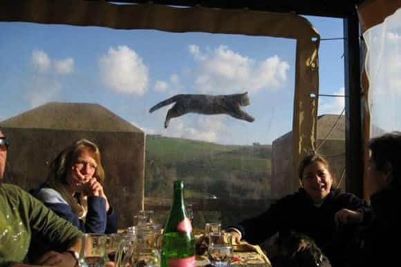 photobomb-levitating-cat.jpg
