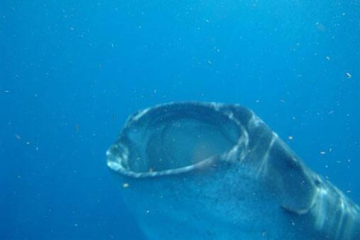 planktonfeature.jpg