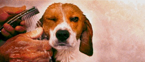 pointillistdogfeature.jpg