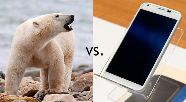 polar-bear-vs-phone.jpg