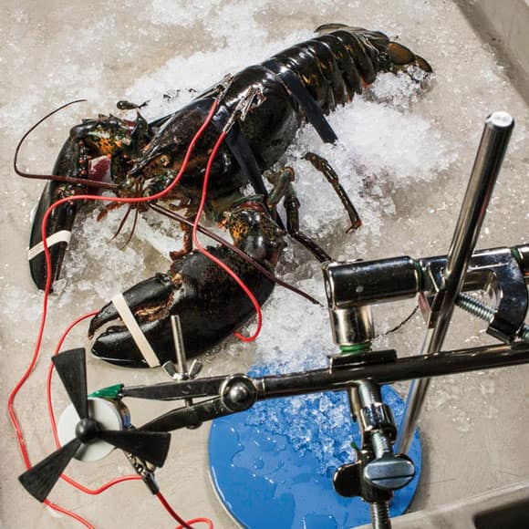 power-lobster-feature.jpg