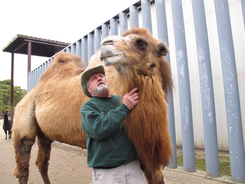 Princess the Camel