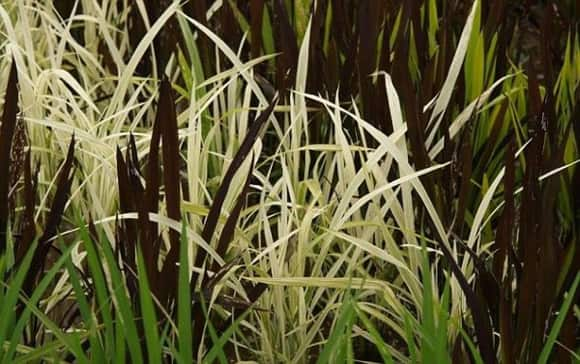 rice-paddy-close-up.jpg