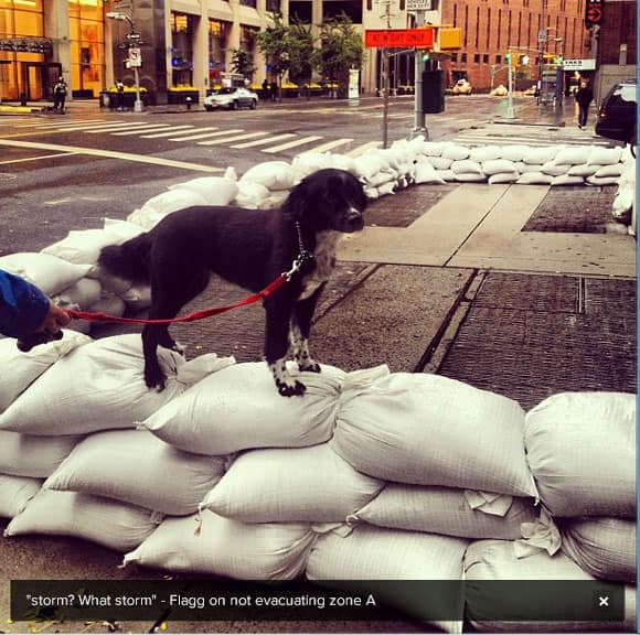sandy-dog-jamesnord.jpg