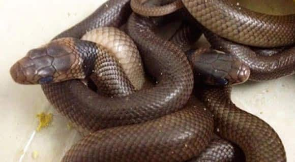 snake-eggs-found-by-3-year-old-australian-boy-end-up-hatching-in-his-bedroom-closet-feature1.jpg