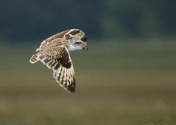 weird-wildlife-flying.jpg