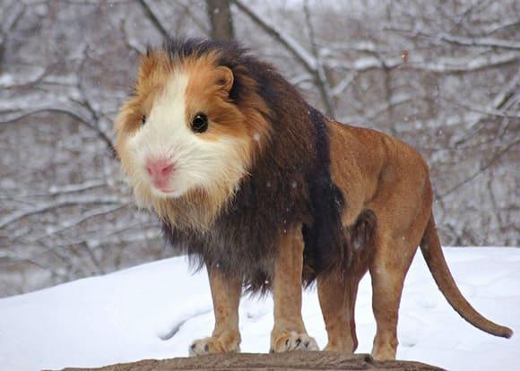 Weird Animals Not Real 5