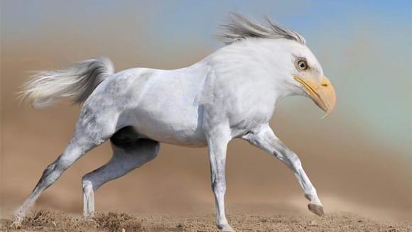 weird-wildlife-horseagle.jpg