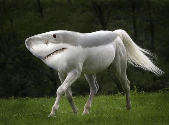 weird-wildlife-shorse.jpg