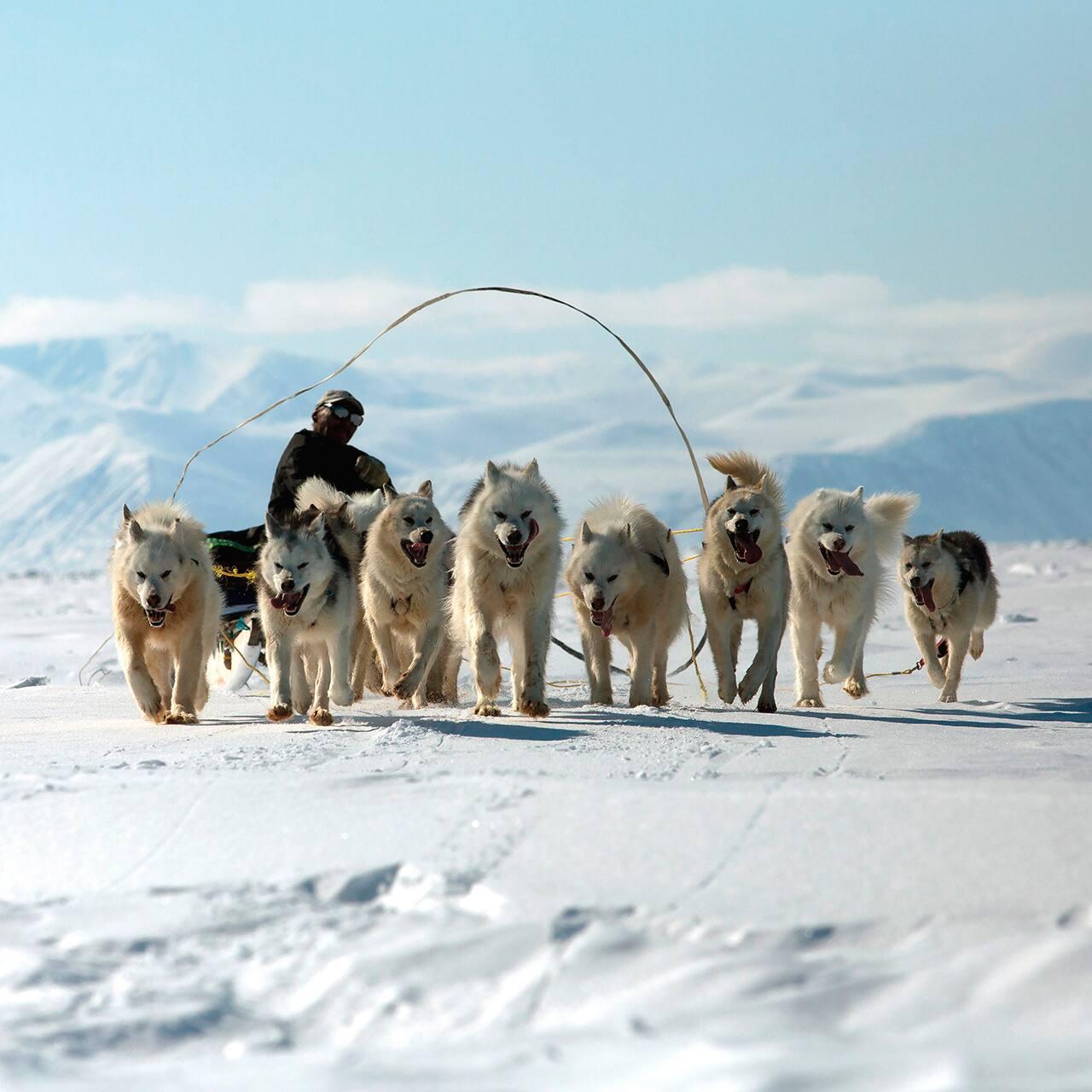 Credits - Wild Canada