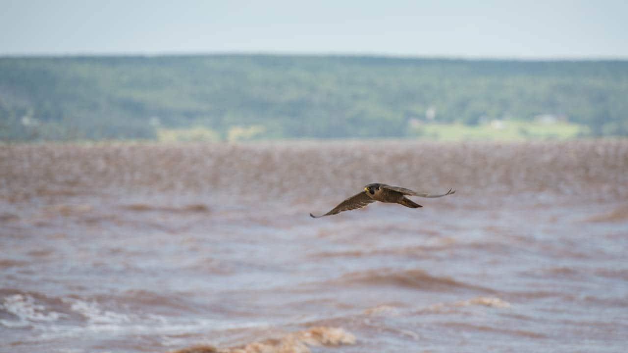 falcons_1280