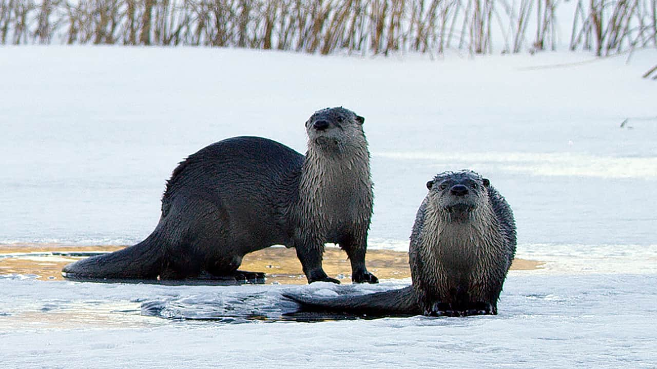 otters_1280